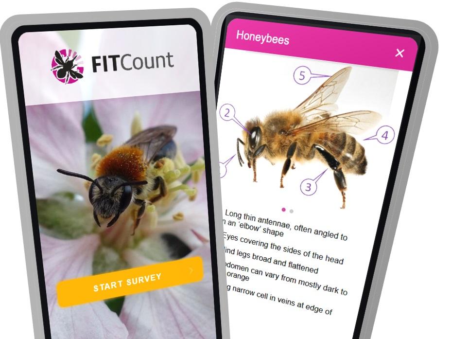 FIT Count_app_
