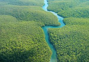 Amazon rainforest aerial view.  Photo: Shutterstock