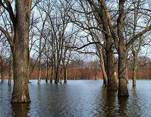 Trees in a flooded field