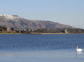 A swan on Loch Leven on a sunny winter's day