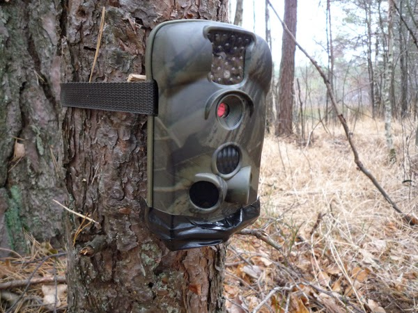 One of the newly fitted camera traps in the Chernobyl exclusion zone.