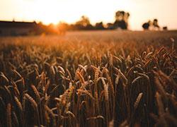 Food sunset love field
