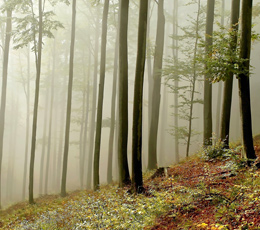 Forest soils are emitting climate-damaging nitrous oxide, according to the European Nitrogen Assessment