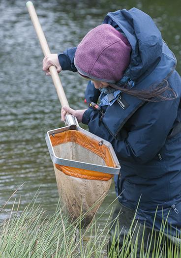 Surveyor checking finds in a freshwater sampling net