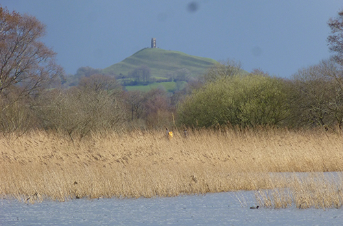 Wetland scene with Glastonbury Tor in the background