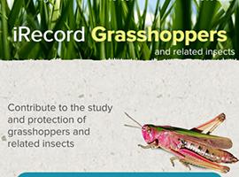 iRecord Grasshoppers app screenshot