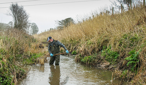 Scientist using a hand-net to capture sticklebacks in a stream