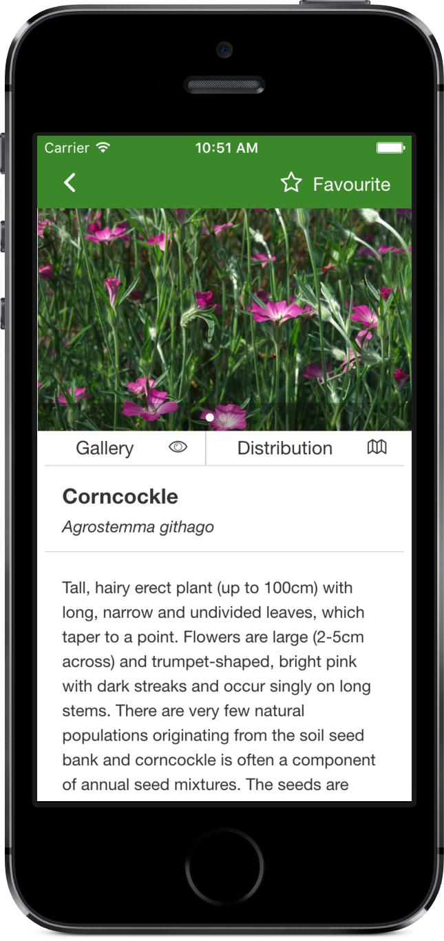 Rare Arable Flowers profile screenshot