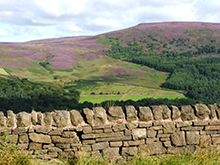 Stone wall and fields
