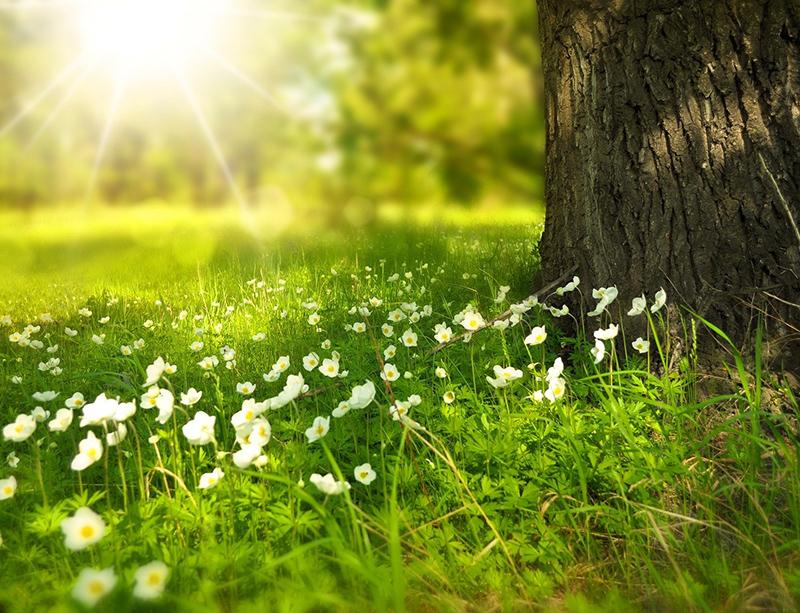 Springtime vegetation