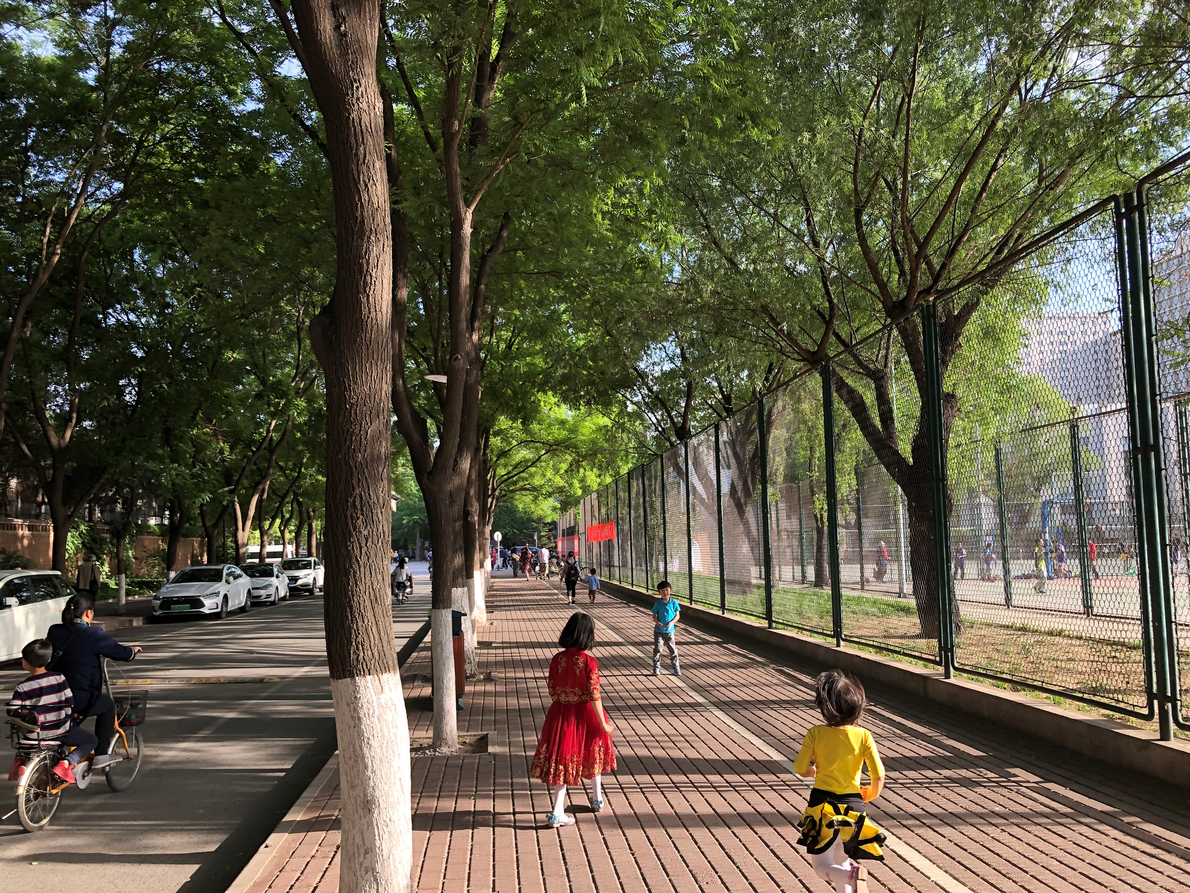 Shade from street trees in Beijing, China