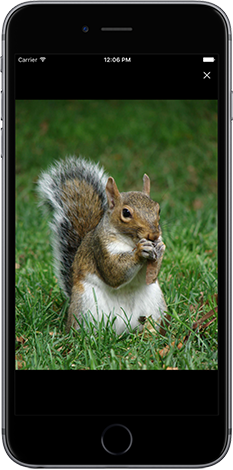 iRecord app screenshot showing photo of grey squirrel