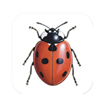 iRecord Ladybirds mobile app logo