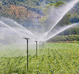 Irrigating crops. (Photo by Shutterstock)