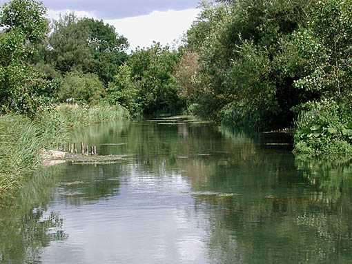 riverside vegetation