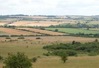 Landscape of martin down