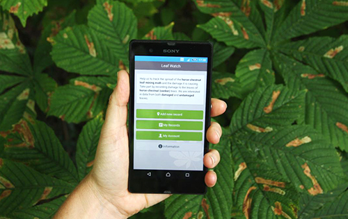 The LeafWatch app against a background of leaves damaged by the horse-chestnut leaf-miner moth