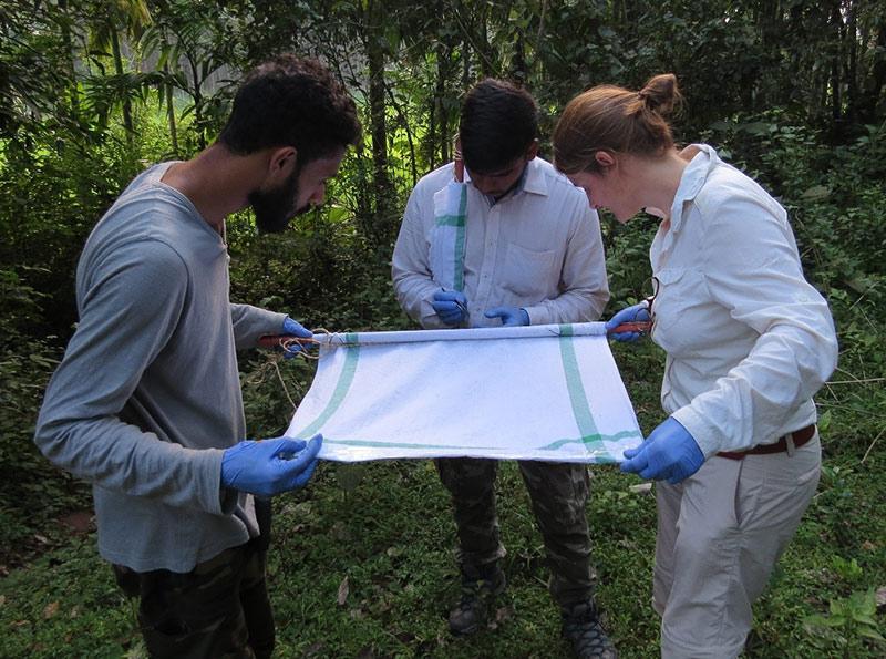 Examining a cloth used in fieldwork
