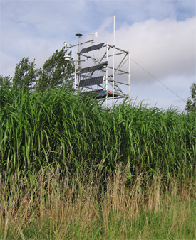 Miscanthus monitoring tower