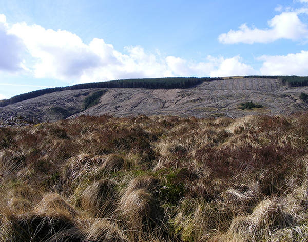 Mixed land cover in an upland catchment, Plynlimon.