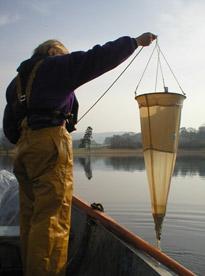 Monitoring phytoplankton at Windermere