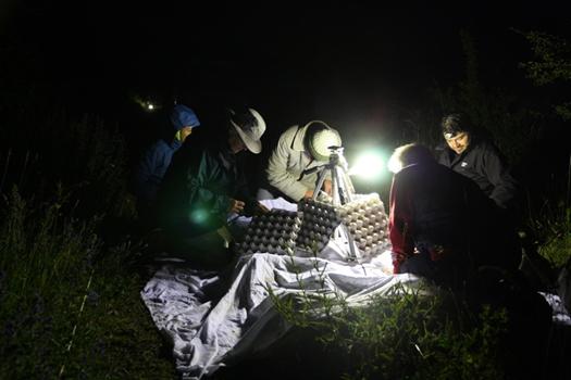 Naturalists recording moths at a light trap