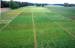 The Park Grass experiment at Rothamsted. Copyright: Rothamsted Research