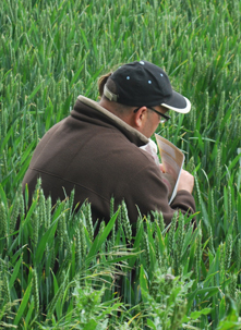 16,000 insects were recorded during the 2012 national farm pollinator survey