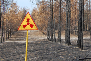 Dead forest near Chernobyl with radioactivity warning sign