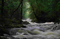 A UK river within a forested landscape - Chris Evans