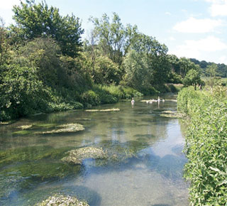 A river and vegetation, with bankside trees
