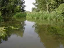 River Stout