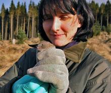 Dr Sarah Burthe (CEH) with a field vole  in Kielder Forest (photo by Łukasz Łukomski)