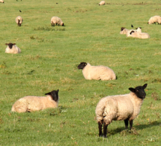 CEH has expertise in researching the radioactive contamination of farm animals