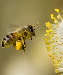 Pollination maintains biodiversity