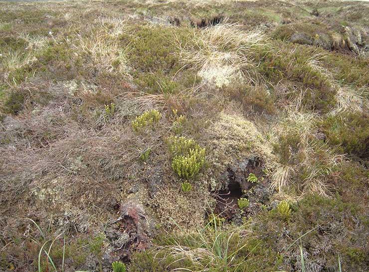 Countryside vegetation