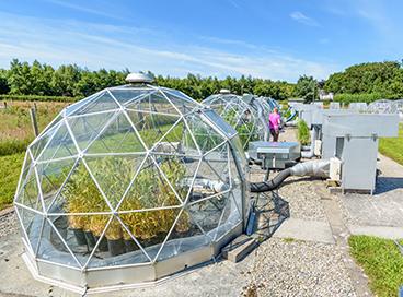 Solar domes in Bangor