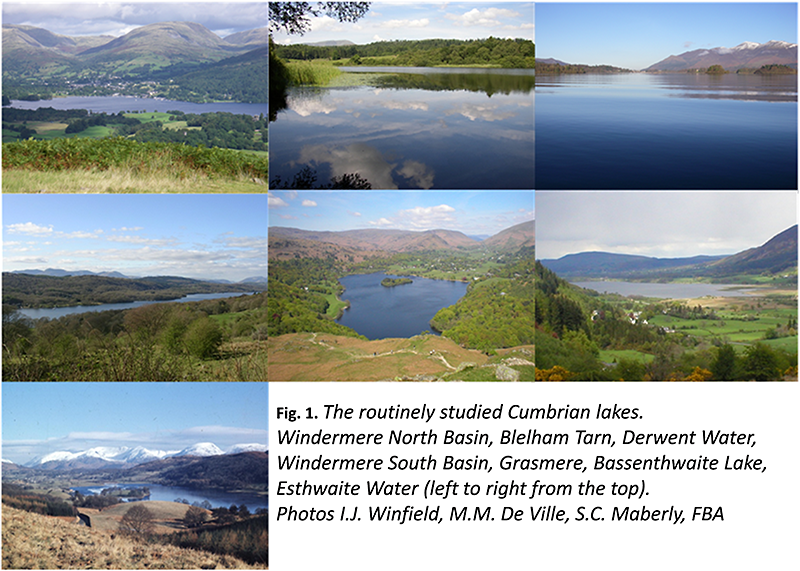 Collage showing seven Cumbrian lakes including Windermere North and South Basin, Blelham Tarn, Derwent Water, Grasmere, Bassenthwaite Lake and Esthwaite Water