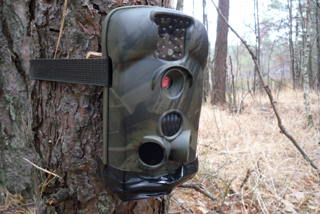Wildlife trap camera deployed in the Chernobyl exclusion zone