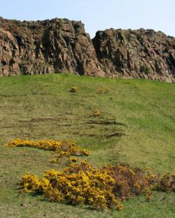 Unimproved grassland in Edinburgh