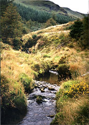 An upland stream in mid Wales