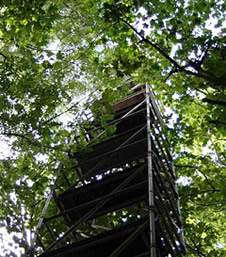 A scaffold tower used in research at Wytham Woods