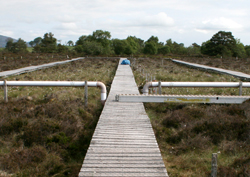 Boardwalks at Whim Bog