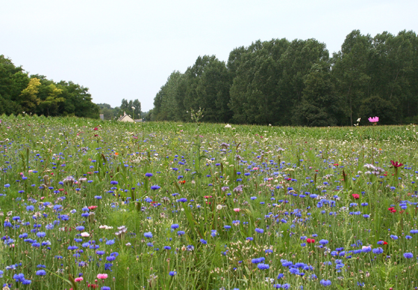 Floral resources in a field