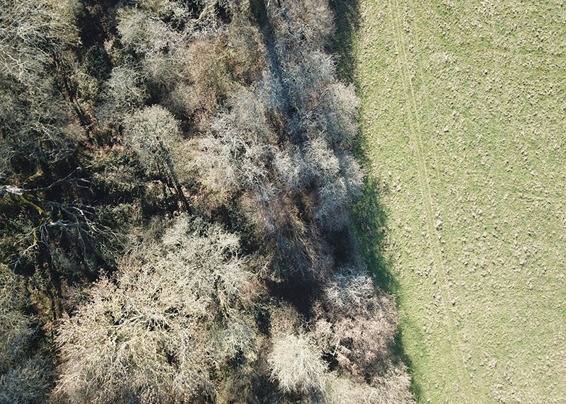 Woodland-grassland boundary image from above