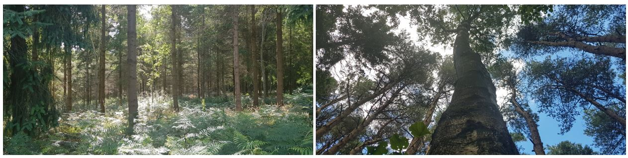 Two photos of trees